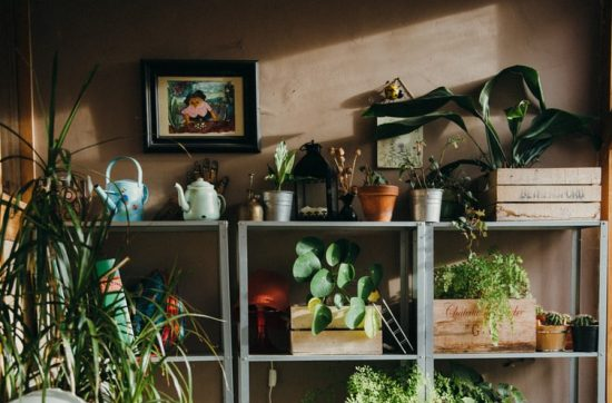vacaciones plantas verano regar