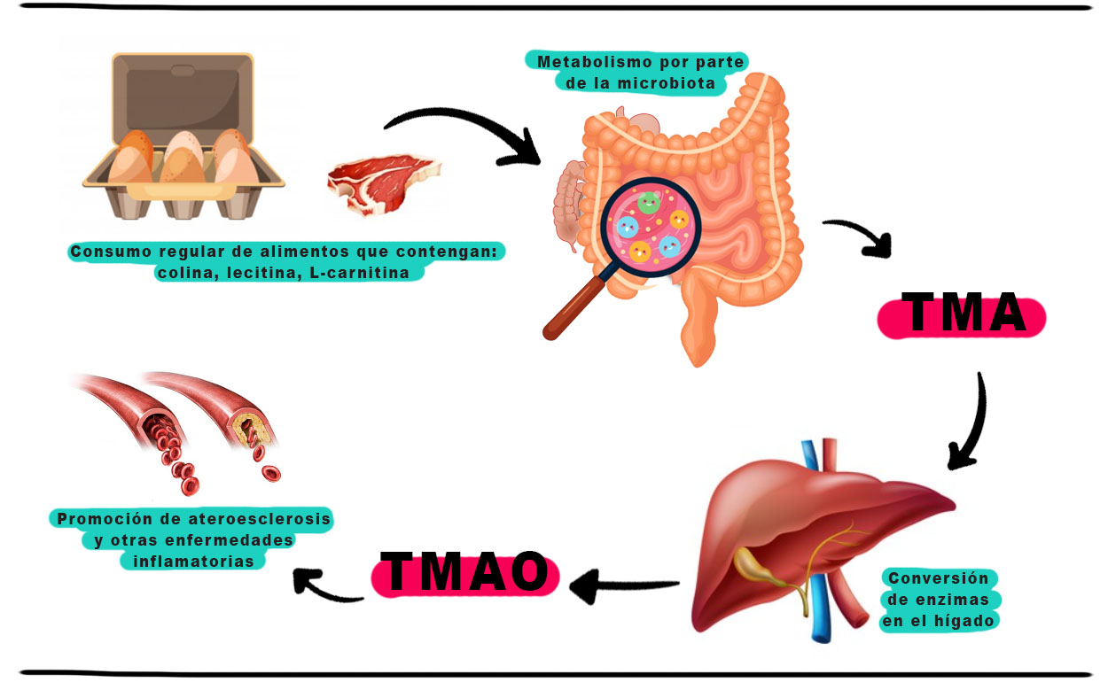 Infografía Nutririana TMAO